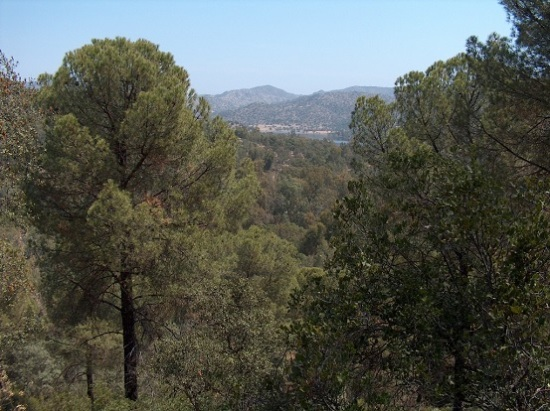 En la Sierra de Andújar existe un grupo numeroso de linces ibéricos. Foto: Ayuntamiento de Andújar.