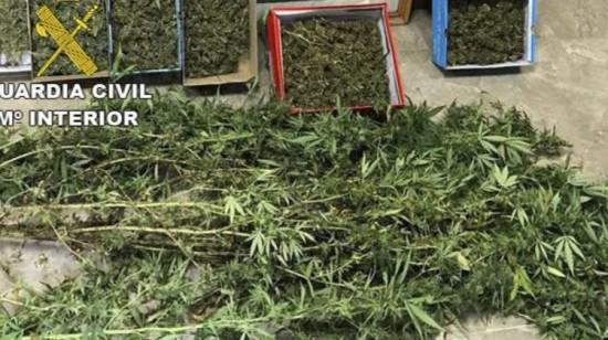 Plantación de marihuana intervenida al detenido. Foto: Guardia Civil.